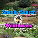 Sneaky Search Wildflowers